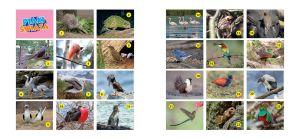ksiazeczka-zawiera-kolorowe-naklejki-z-portretami-ptakow