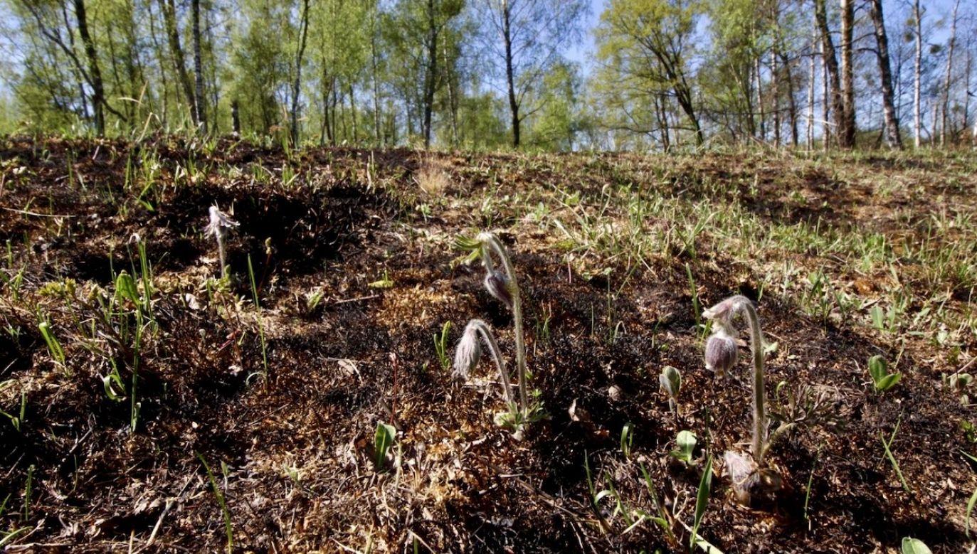 """""""Bez tego deszczu mielibyśmy wielką katastrofę ekologiczną"""" (fot. Biebrzański Park Narodowy)"""