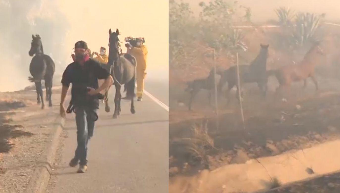 Zwierzę wyrwało się ewakuującym go ludziom (fot. FB/CBS Evening News with Norah O'Donnell)