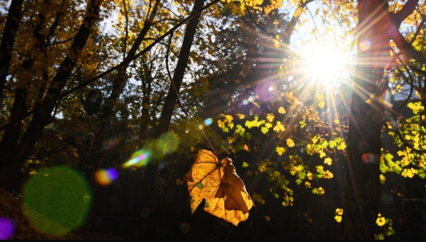 Od poniedziałku kalendarzowa jesień (fot.PAP/Darek Delmanowicz)