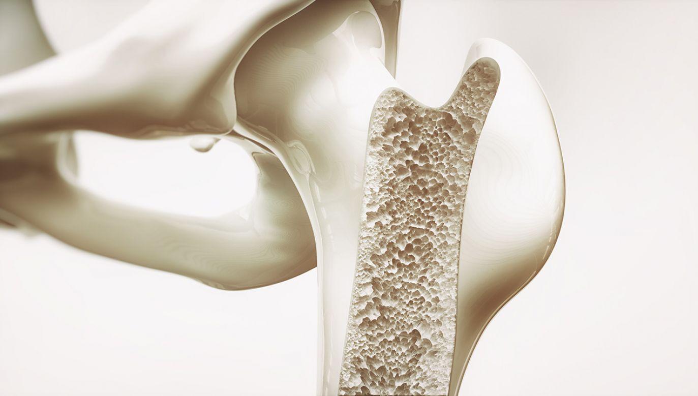 Może to być przełom w badaniach nad kośćmi (fot. Shutterstock/ Crevis)