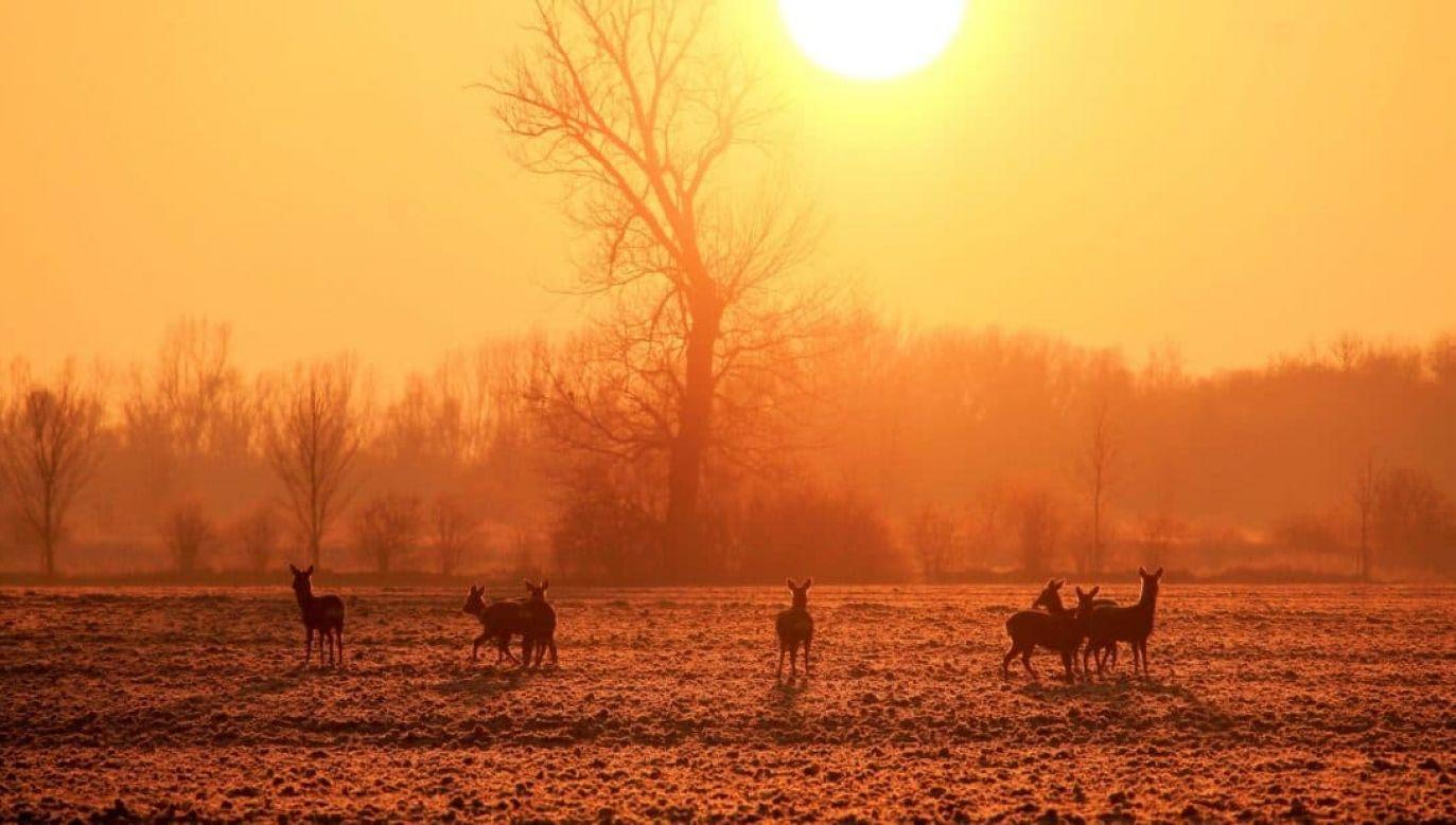 W upały powinno się ograniczyć przebywanie w pełnym słońcu (fot. pixnio.com)
