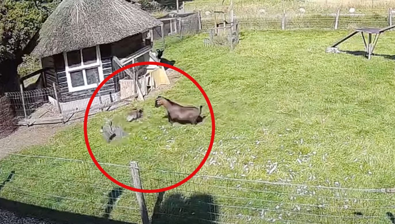 Szybka akcja na podwórku w Holandii (fot. YouTube)