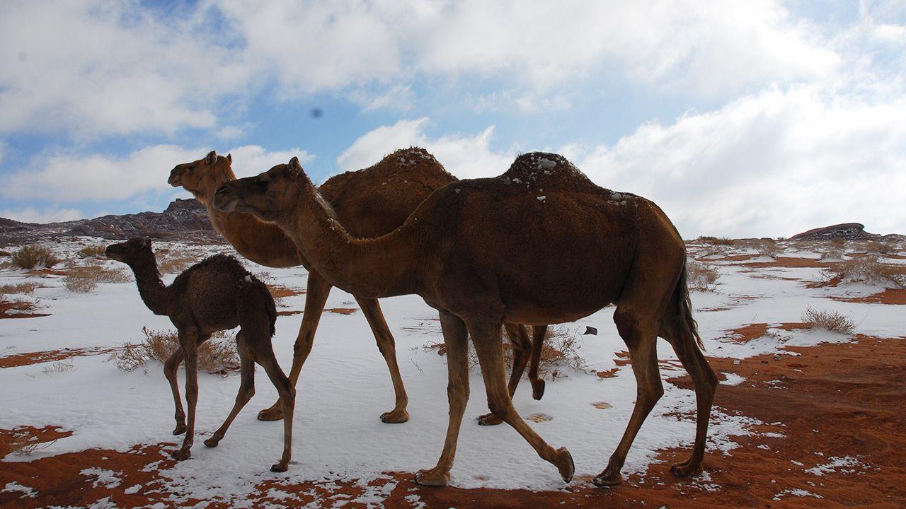 Śnieg pokrył obszary saharyjskie (fot. Shutterstock/Leo Morgan)