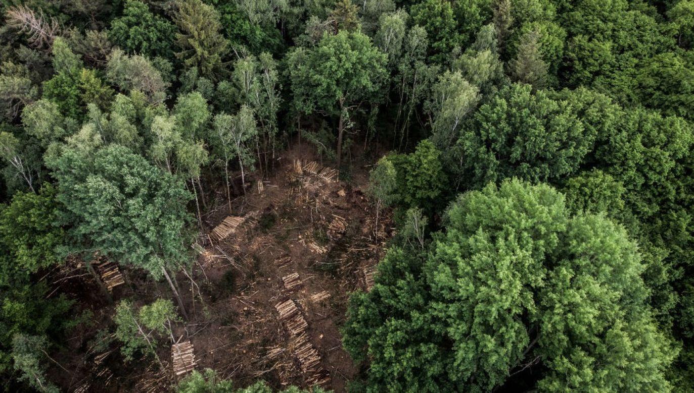 W ubiegłym roku uszkodzone przez korniki drewno stanowiło ponad dwie trzecie całkowitego wyrębu – wynika z danych Urzędu Federalnego (fot. Florian Gaertner/Photothek via Getty Images)