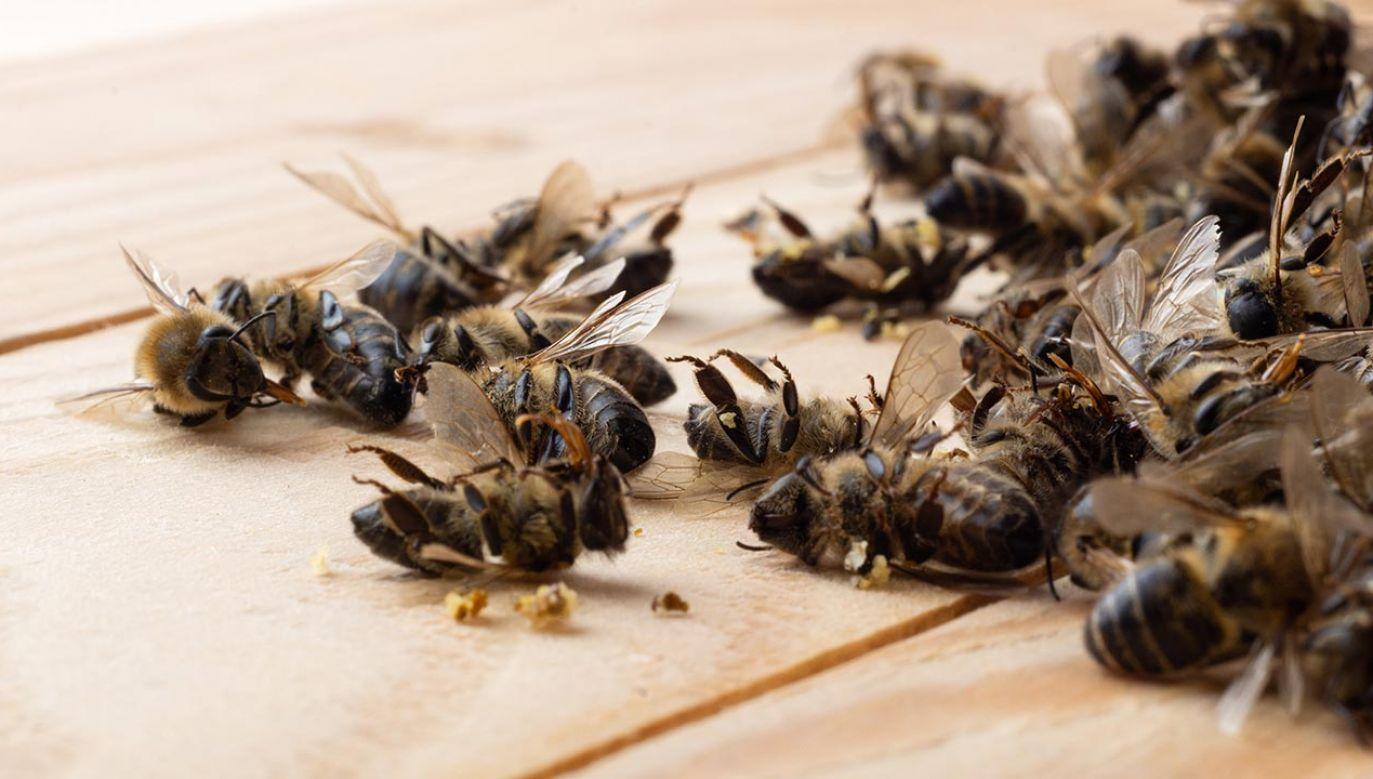 Mężczyzna opryskał rzepak niedozwolonym pestycydem (fot. Shutterstock/kosolovskyy)
