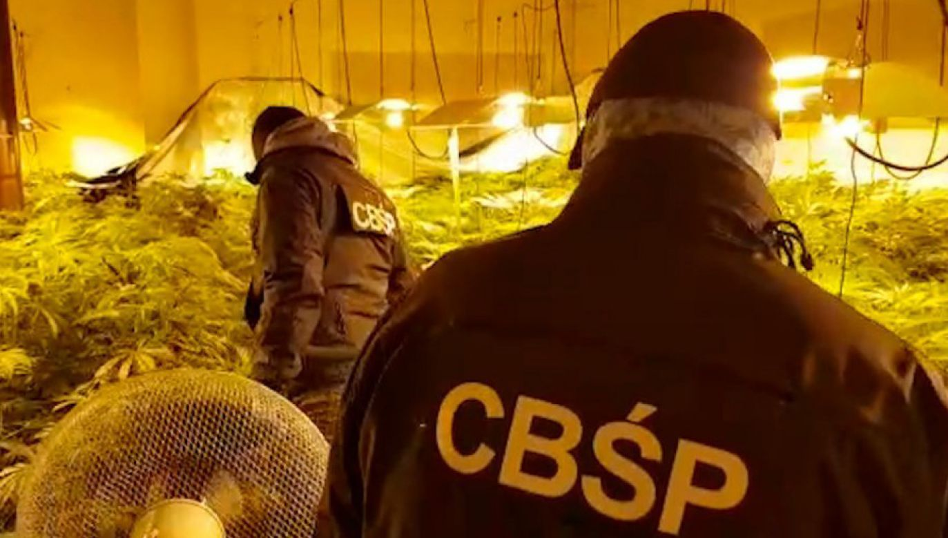 Policjanci na terenie plantacji (fot. CBŚP)