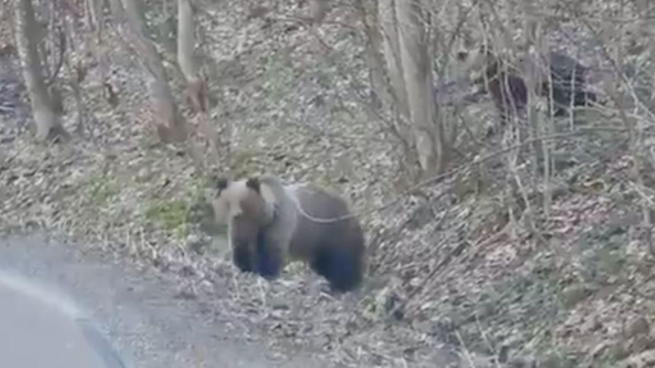 Leśnicy przestrzegają by się nie zbliżać: młode zawsze pilnuje matka (fot. tt/fot. K. Nóżka/@LPanstwowe)