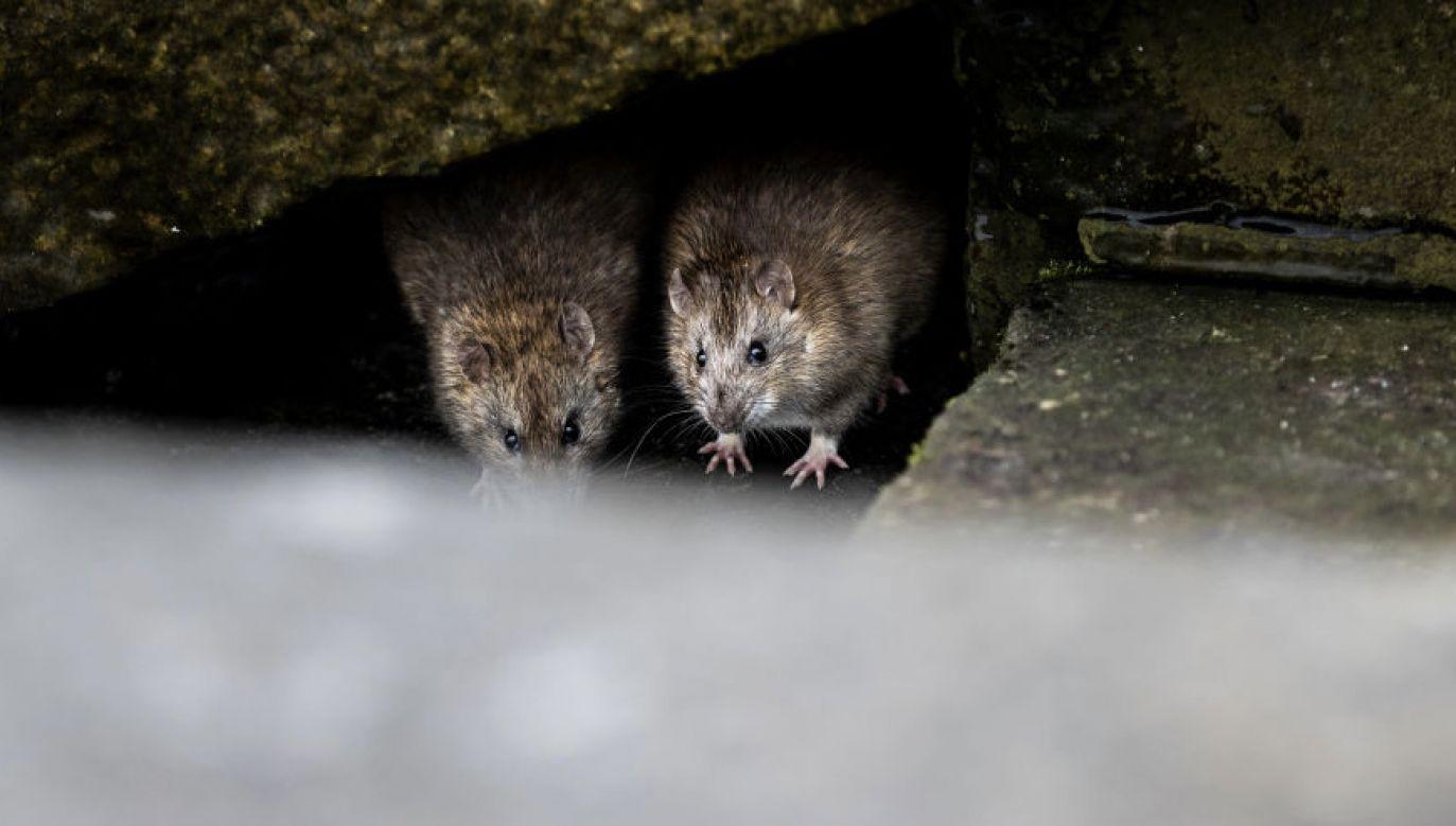 Część radnych opozycji jest jednak przeciwna propozycji ekologów (fot. Florian Gaertner/Photothek via Getty Images)