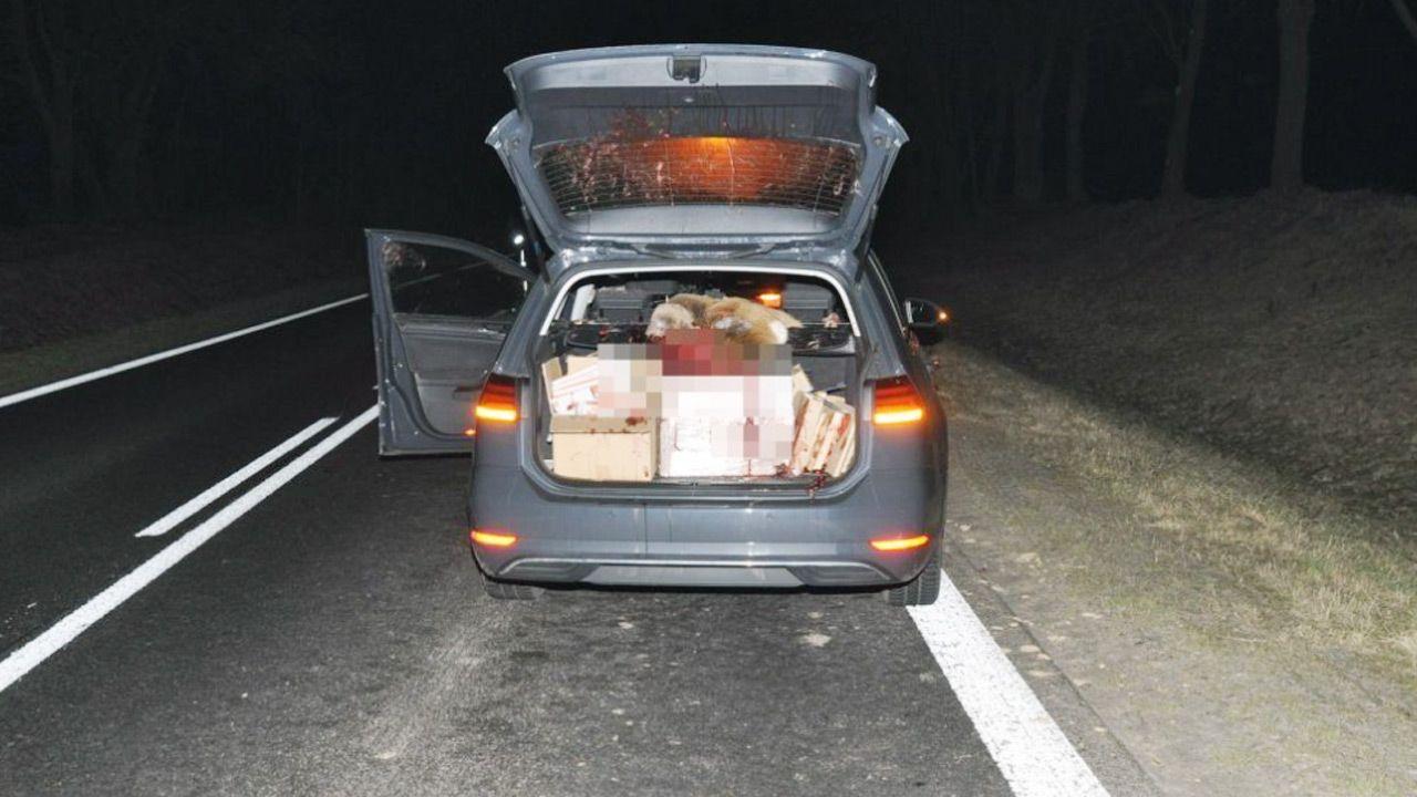 Sarna wybiegła wprost przed samochód (fot. Policja)