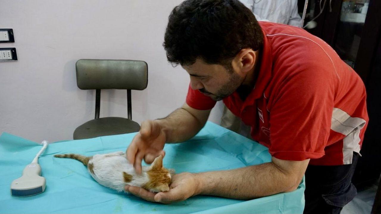 Mohammad Alaa al-Jaleel (fot. A.Alemam/Anadolu/Getty Images)