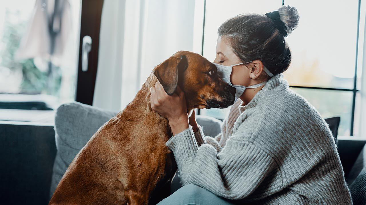 Psy i koty mogą nosić wirusa (fot. Shutterstock/Dmitry Kalinovsky)