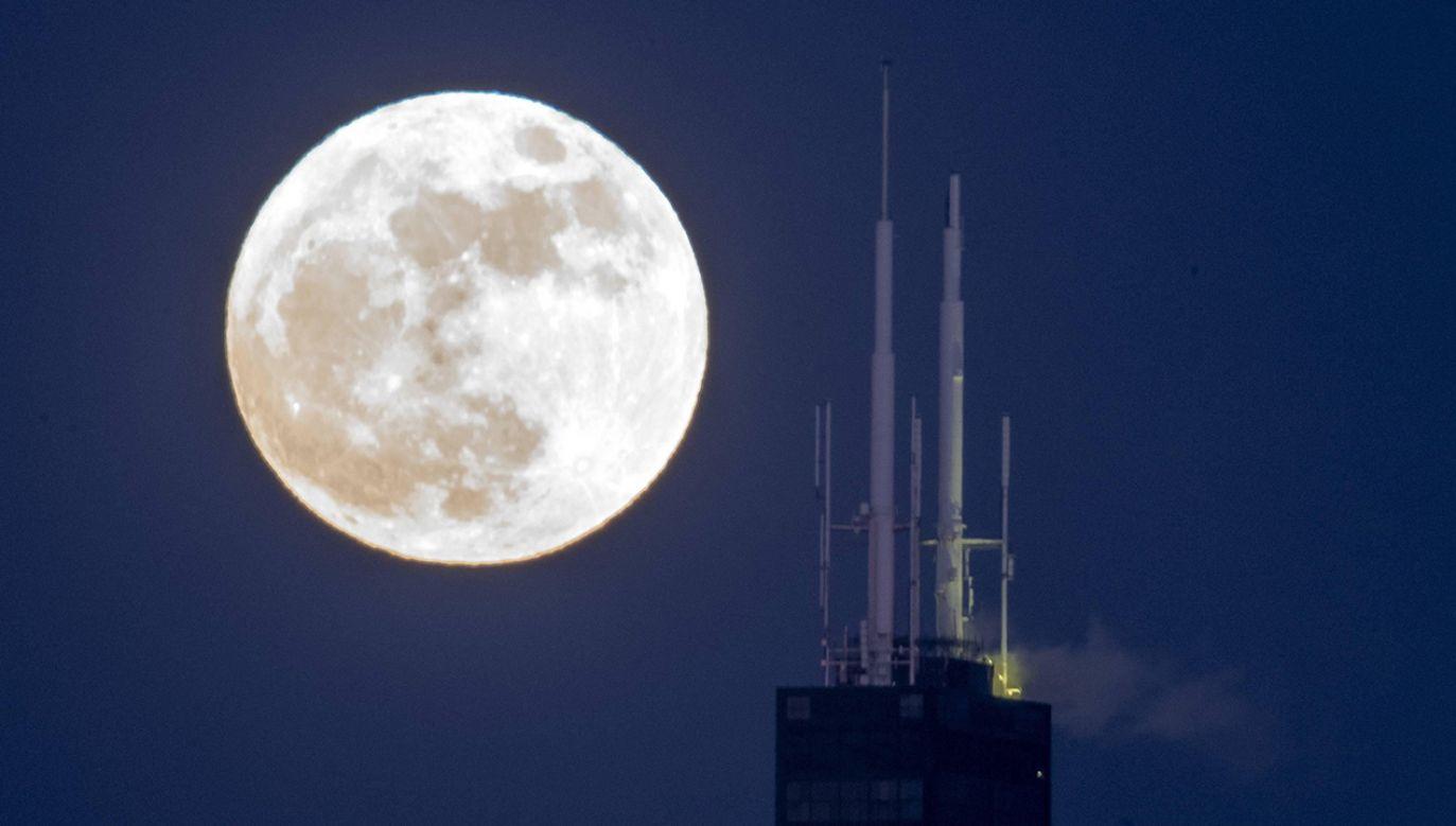 Księżyc Robaków zwiastuje też wiosnę (fot. arch. PAP/Abaca)