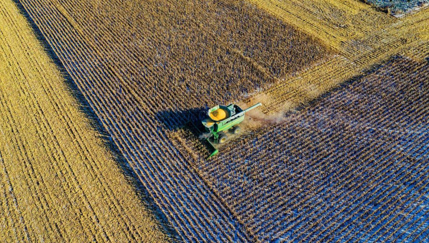 Ekologiczne, sprzyjające bioróżnorodności farmy powinny być przyszłością rolnictwa (fot. Pexels)