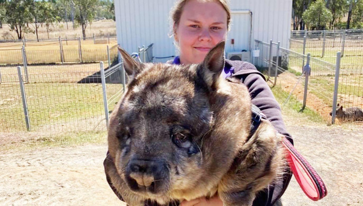 Samica waży aż 35 kg (fot. FB/Safe Haven - AACE)