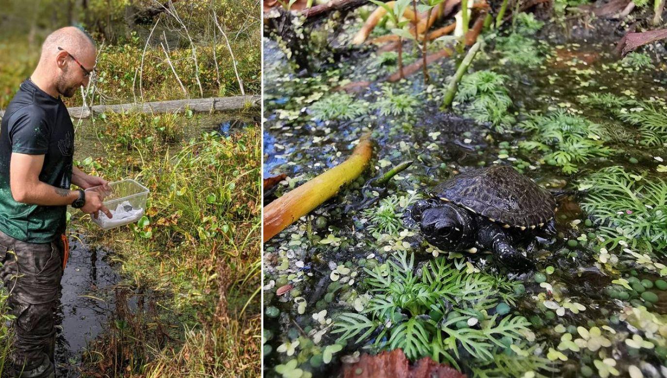 W polu żółwie nie miały szans na przetrwanie (fot. FB/Kumak)