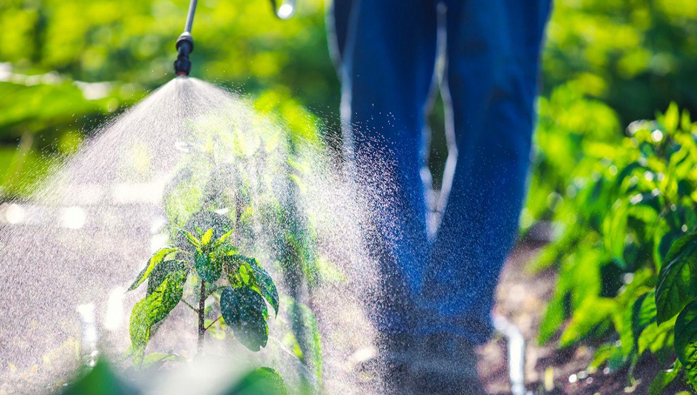 Szeroko stosowany środek owadobójczy, może zwiększać ryzyko przewlekłej choroby nerek (fot. Shutterstock)