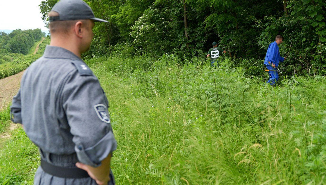 Więźniowie z Zakładu Karnego w Medyce podczas oczyszczania pasa granicznego w rejonie polsko-ukraińskiej granicy (fot. arch. Darek Delmanowicz)