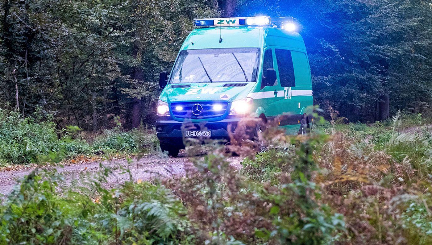 8 października w kompleksie leśnym między Kuźnią Raciborską a Rudą Kozielską doszło do wybuchu podczas unieszkodliwienia znalezionych bomb (fot. PAP/Hanna Bardo)