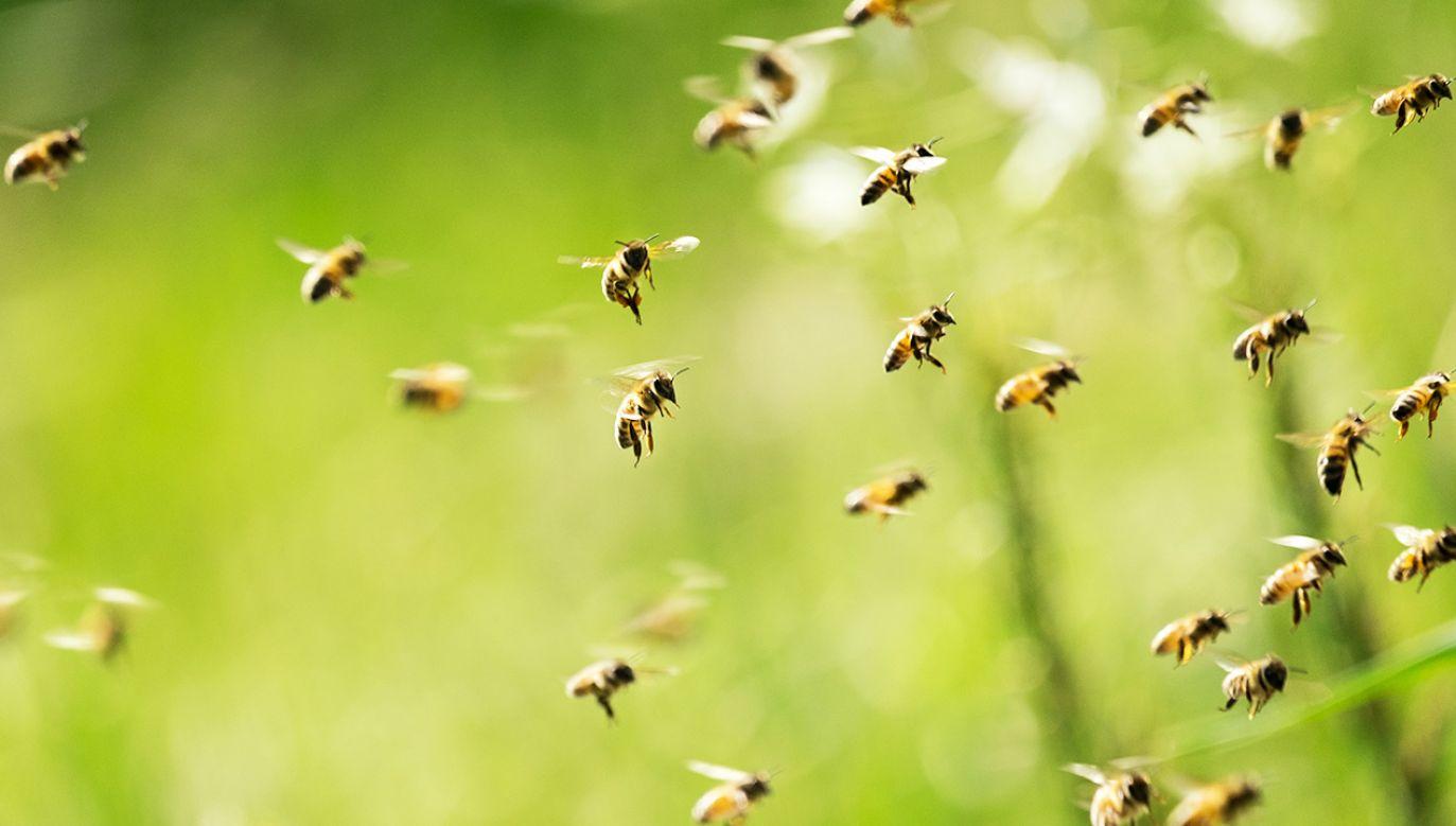 Owady można tresować jak psy (fot. Shutterstock)