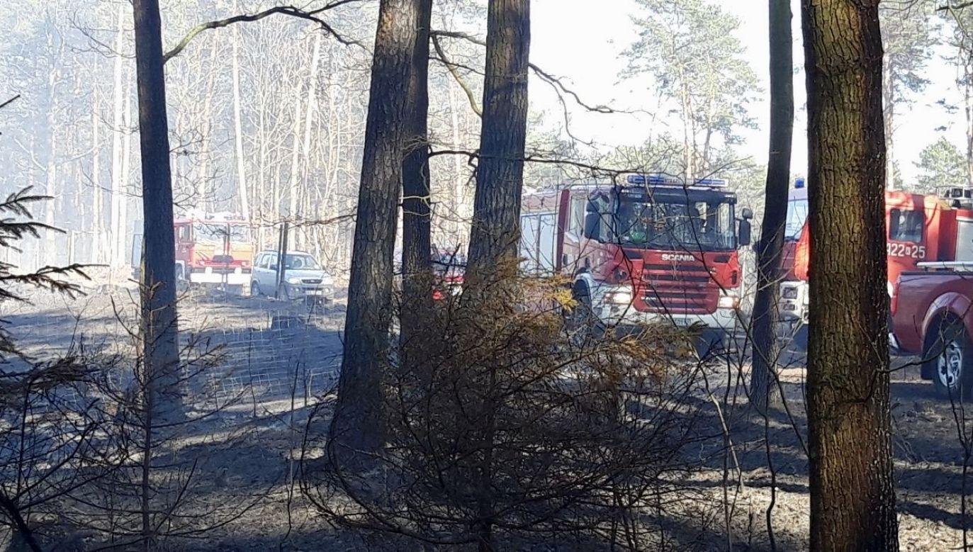 Na miejscu pracuje 18 zastępów staży pożarnej (fot. Komenda Powiatowa Państwowej Straży Pożarnej w Dębicy)