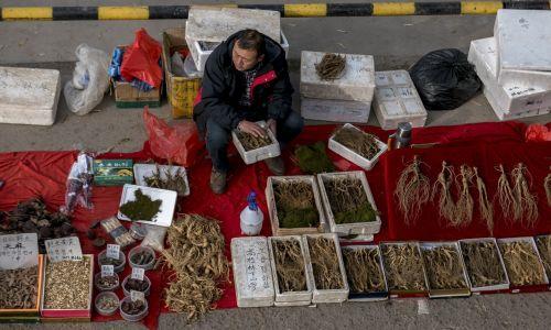 Obecne technologie hodowli tkanek roślinnych pozwalają na zaspokojenie światowego zapotrzebowania na wyciągi z żeń-szenia, co byłoby niemożliwe w przypadku pozyskiwania ich z tradycyjnych upraw. Żeń-szeń rośnie wolno i dopiero po 15 - 20 latach można przetwarzać korzeń. Na zdjęciu naturalny żeń-szeń sprzedawany na bazarze nadrzecznym w Yanji, gdzie lokalne produkty rolne przywożą codziennie mieszkańcy okolicznych wsi. Chiny, październik 2016. Fot. Zhang Peng/LightRocket via Getty Images