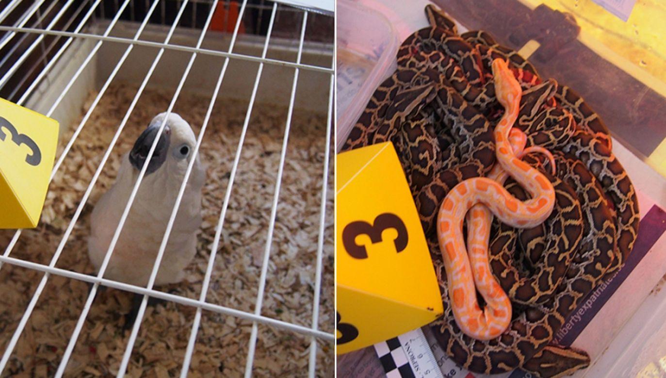 Hiszpańskie służby zatrzymały prawie 200 zwierząt nielegalnie importowanych (fot. Guardia Civil/Europol)