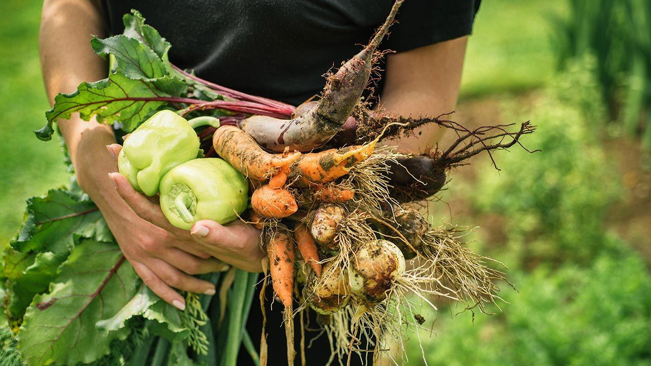 Udało się uratować ponad sześć ton żywności (fot. Shutterstock/viki2win)
