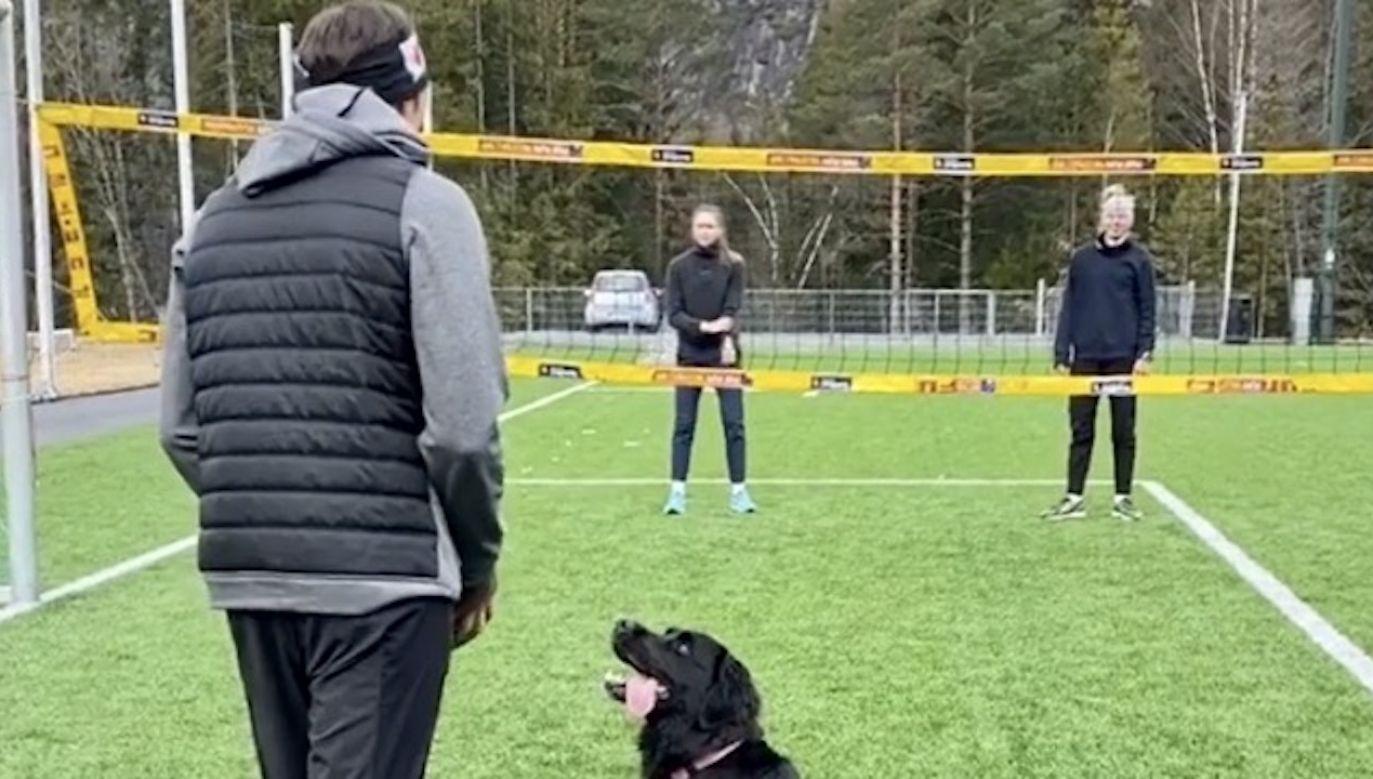 """Zwierzę znakomicie wyczuwa, gdzie spadnie piłka i bezbłędnie """"wystawia"""" ją siatkarzowi (fot. Instagram/mathiasberntsen96)"""