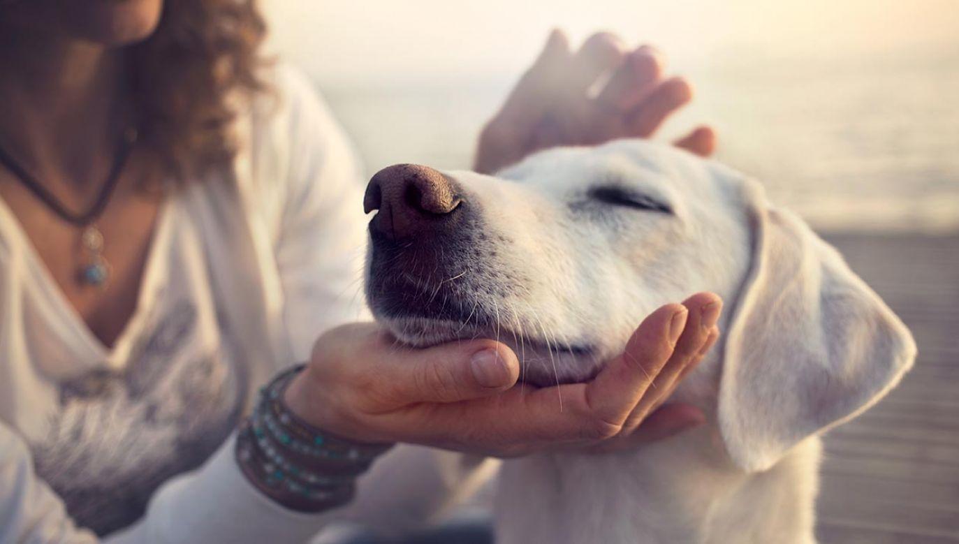 Okazuje się, że gdy pies jest młody, starzeje się bardzo szybko w porównaniu do człowieka (fot. Shutterstock/ Cristina Conti)