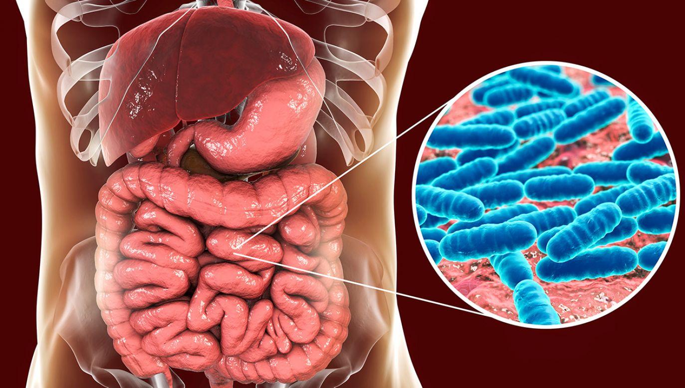 Okazało się, że skuteczność leczenia raka przy pomocy immunoterapii ukierunkowanej przeciwko białku CD47 zależy od obecności w jelitach bakterii z rodzaju Bifidobacterium  (fot. Shutterstock/Kateryna Kon)