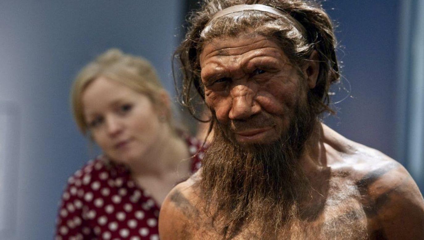 Dziedzictwo uzyskane od neandertalczyków jest niejednoznaczne (fot. Will Oliver/PA Images/Getty Images)
